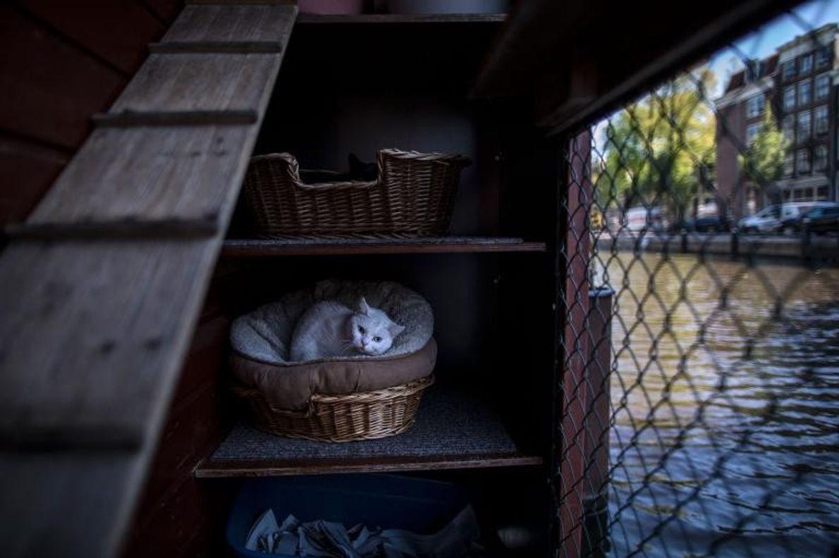 Fibi, une chatte de 4 ans, se repose dans un panier sur le pont du Catboat.