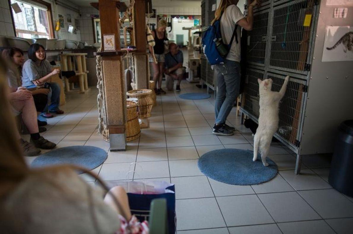 Chaque année, des milliers de visiteurs se rendent sur le Catboat. La majorité d'entre eux sont ...