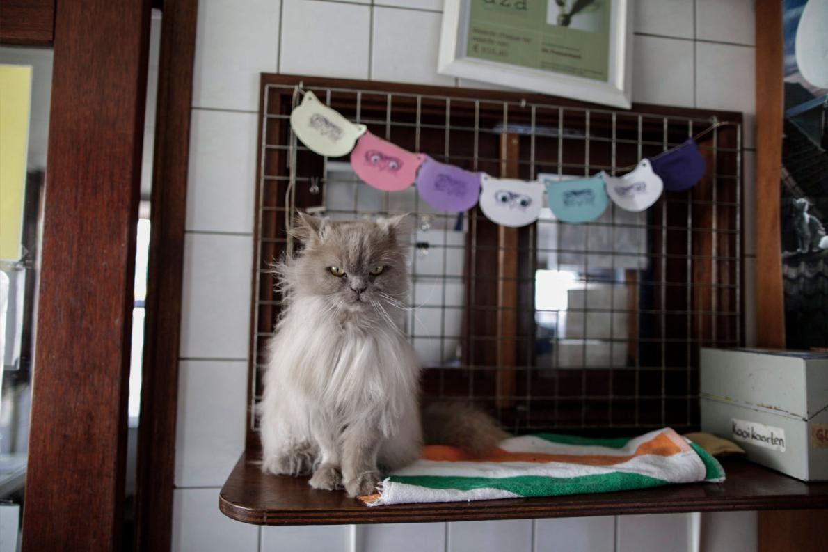 Kasumi attend qu'un volontaire du Catboat vienne brosser son pelage.