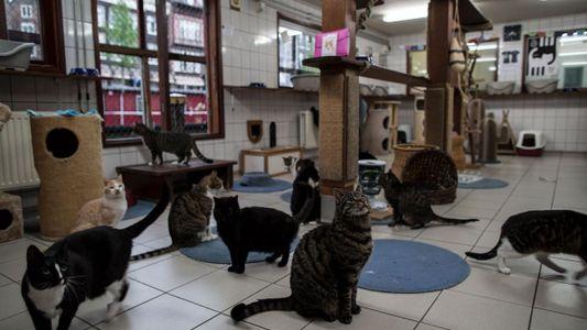 Montez à bord du Catboat, le refuge flottant pour chats