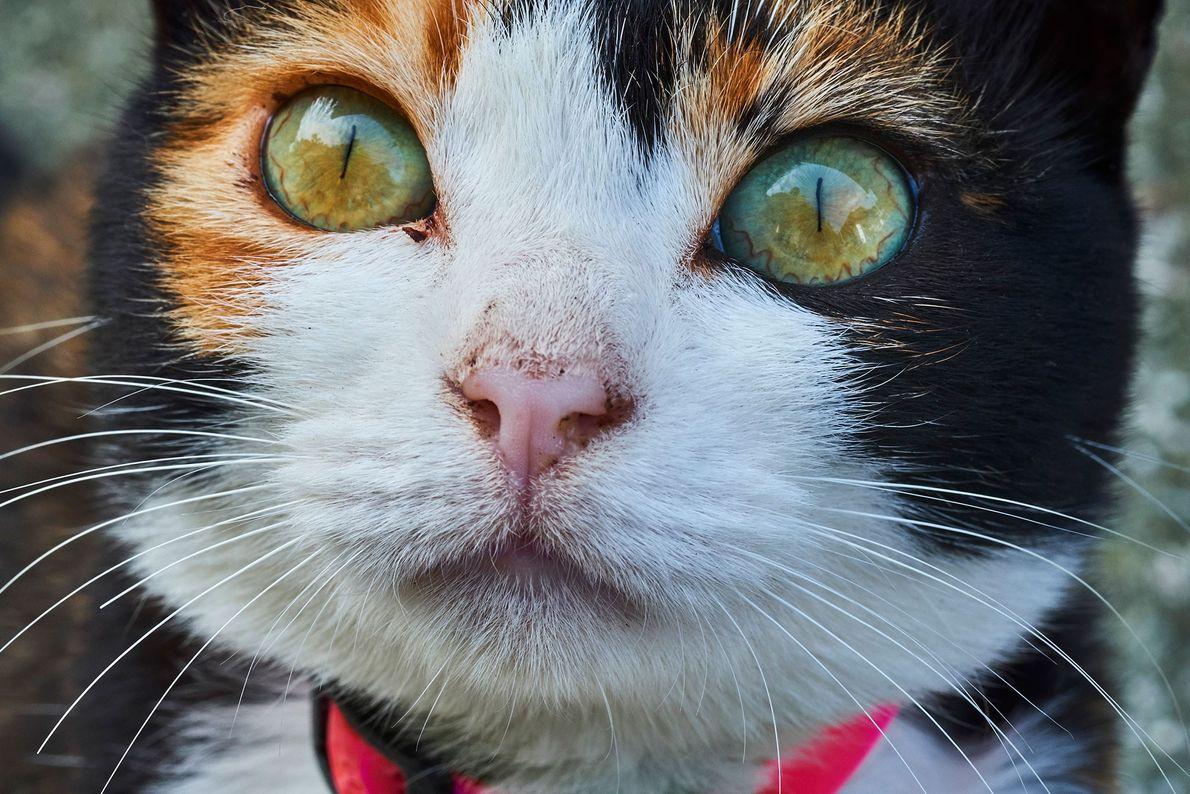 Aoshima, également appelée l'« île aux chats » au Japon, compte dix fois plus de chats ...