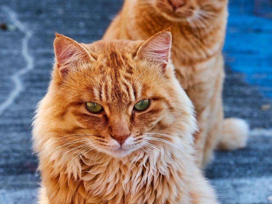 Les chats de rues en images