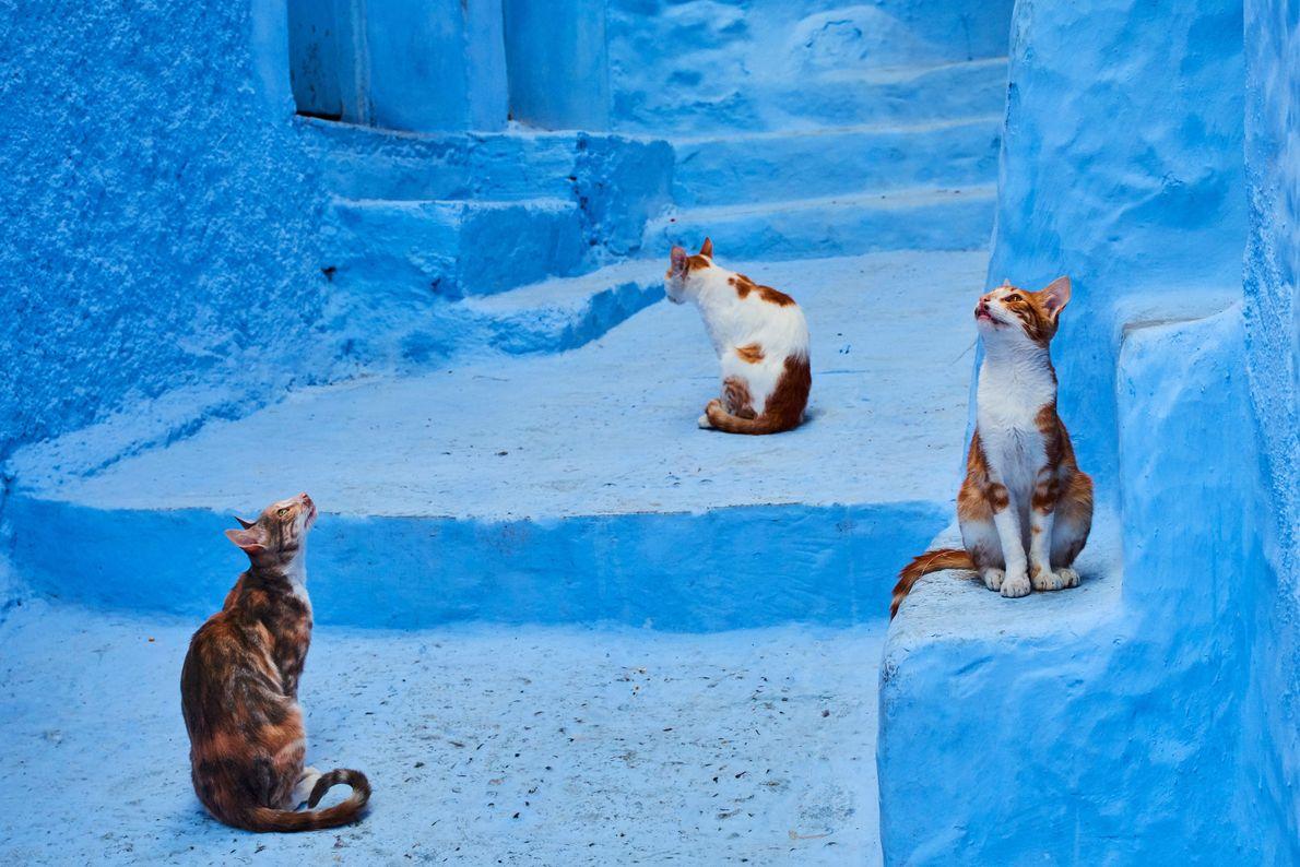 Des chats observent les environs à Chefchaouen, au Maroc.