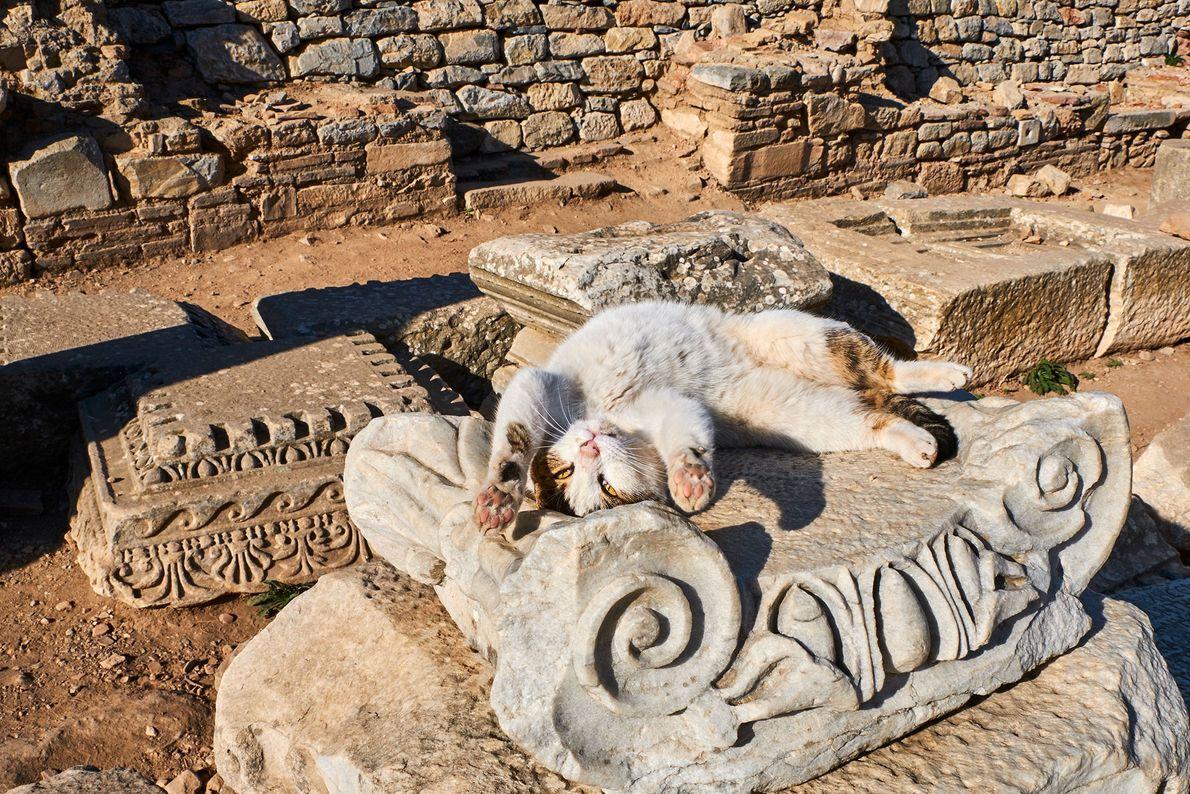 Un chat joueur s'étire au soleil sur des ruines en Turquie. L'islam est la religion principale ...