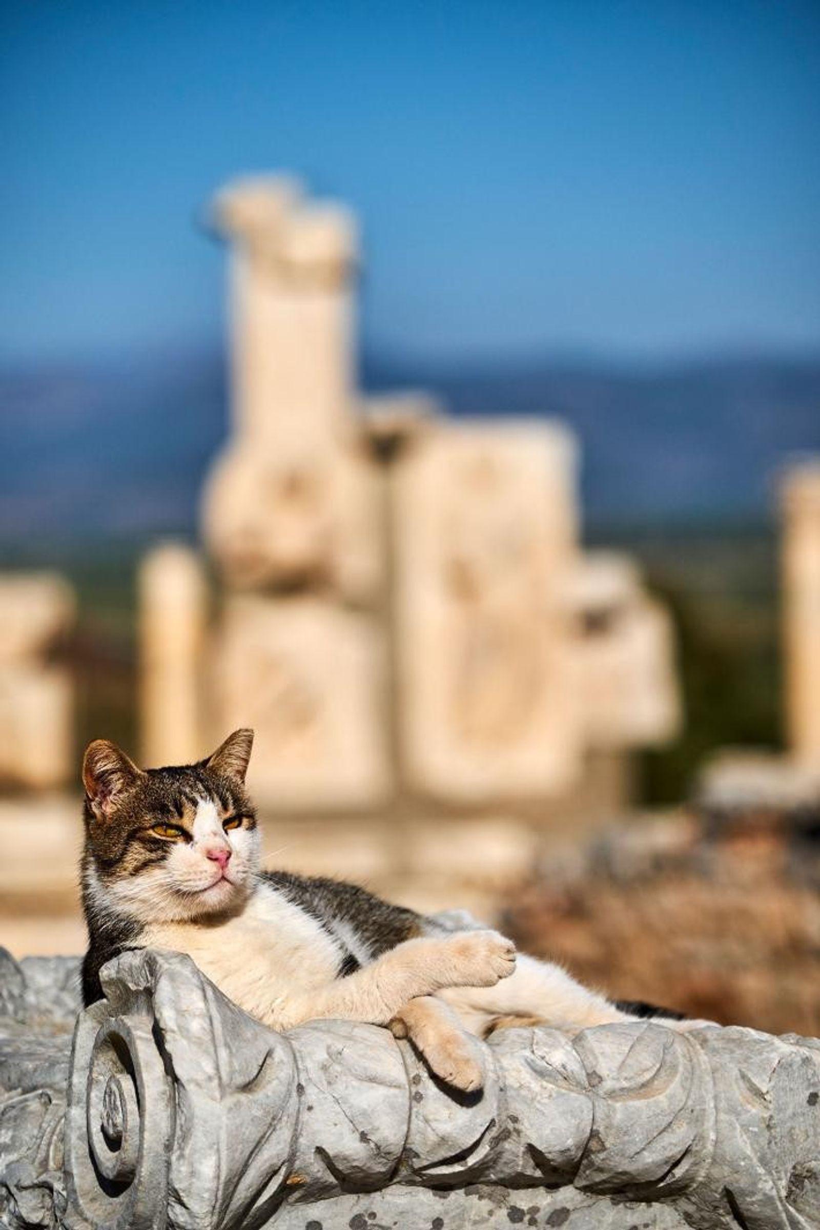 Un chat se prélasse sur l'une des ruines du site archéologique d'Éphèse, une ancienne ville portuaire ...