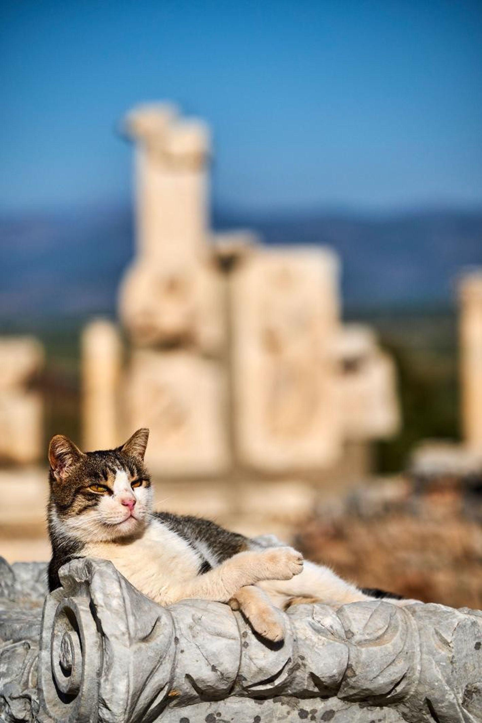 Un chat se prélasse sur l'une des ruines du site archéologique d'Éphèse, une ancienne ville portuaire romaine située dans l'actuelle Turquie et vieille de 2 000 ans.