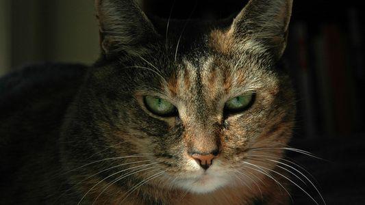 Murmurez-vous à l'oreille des chats ? Certaines personnes possèdent ce don