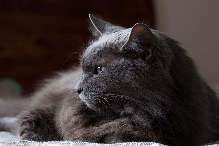 Les chats sont souvent perçus comme impénétrables, mais ils ont probablement des formes de communication subtiles ...