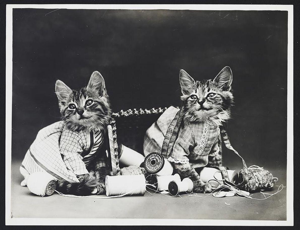 Deux chatons espiègles peuvent faire bien des dégâts.