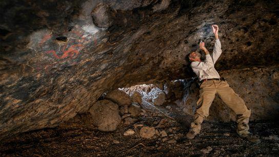 Membre de l'équipe d'archéologues, Jon Picciuolo relève les résidus de plante mâchée insérés dans les crevasses ...