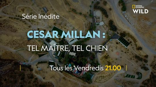 Cesar Milan : tel maître, tel chien | Bande annonce
