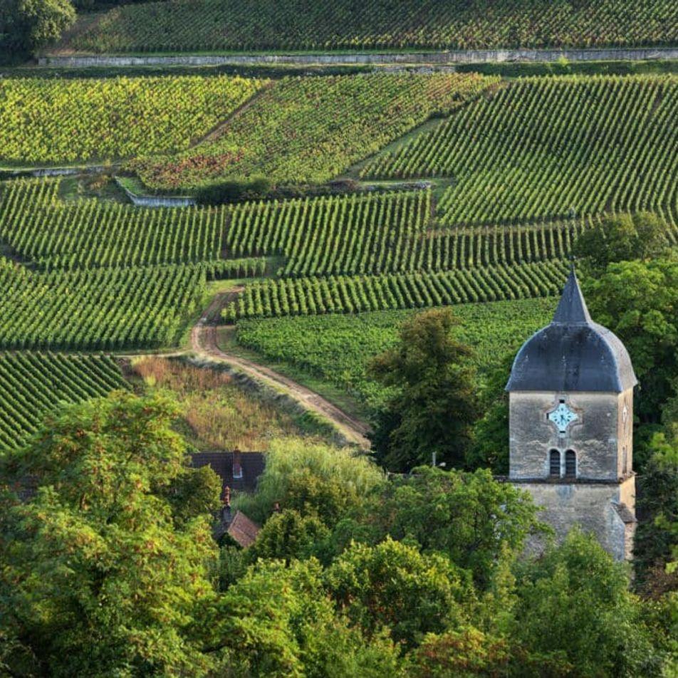 Route des grands crus : itinéraire entre culture et vignes