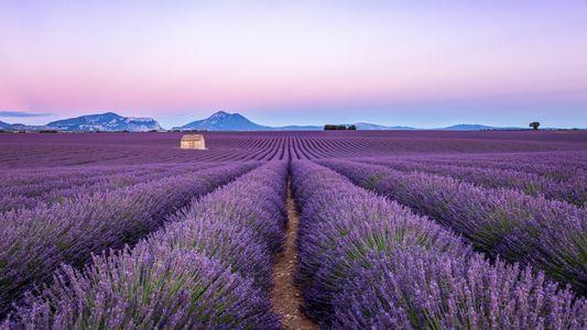 Provence : balade dans les champs de lavande