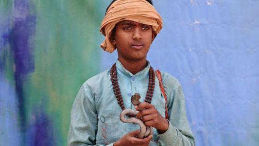 Inde : les charmeurs de serpents pourraient bientôt disparaître