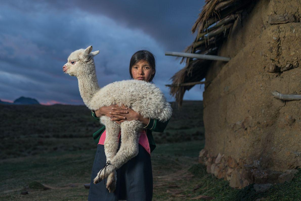 Danila (14 ans) tient dans ses bras un bébé alpaga près de Huaylillas sur les hauts ...