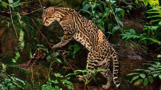 Les plus beaux animaux sauvages du Mexique en images