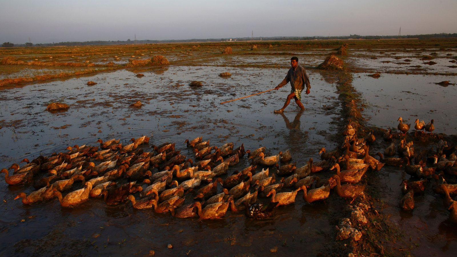 Une nouvelle commission internationale espère aider les paysans et le monde entier à s'adapter au changement ...