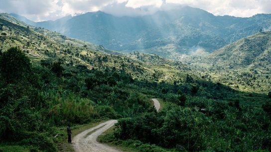 Auréolés d'une épaisse couverture nuageuse, les monts Rwenzori doivent leur nom à un terme signifiant « ...