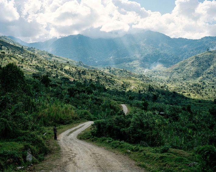 Le retour du café dans les montagnes
