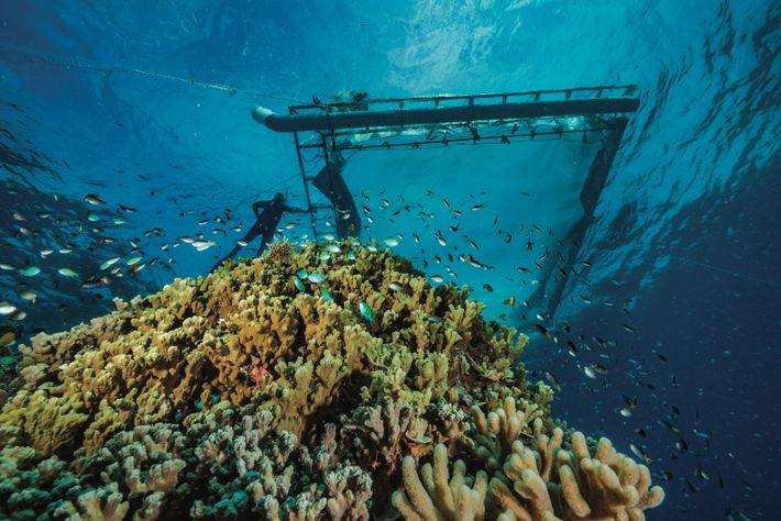 Écologue marin à l'université Southern Cross en Australie, Peter Harrison prépare un filet de collecte en ...