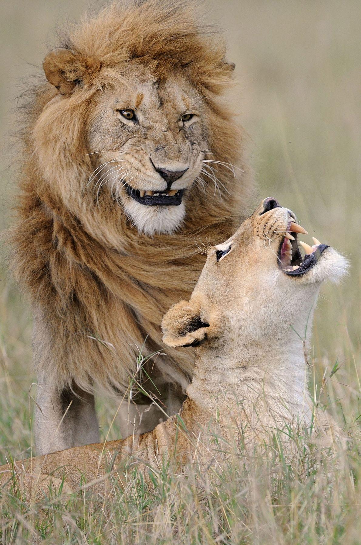 « Après toutes ces années, il me fait toujours rire », se confie cette lionne à ...
