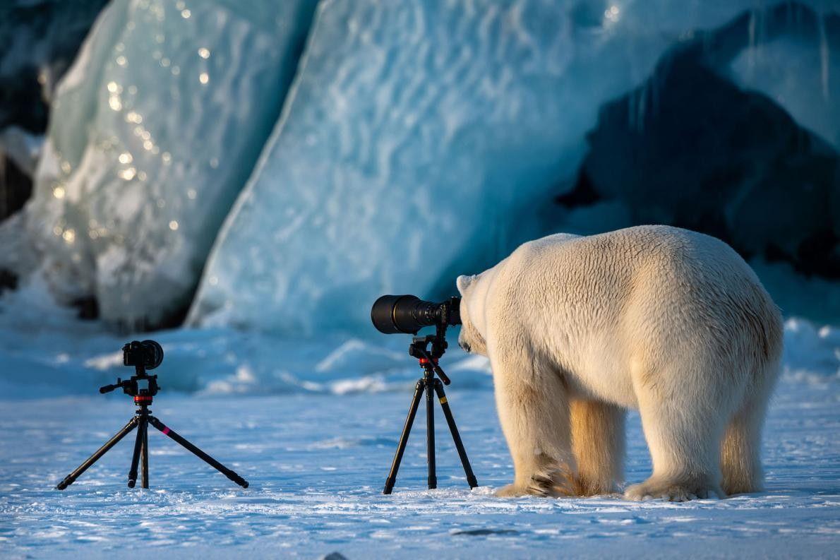 À Svalbard, en Norvège, cet ours polaire met à l'épreuve ses talents de photographe.