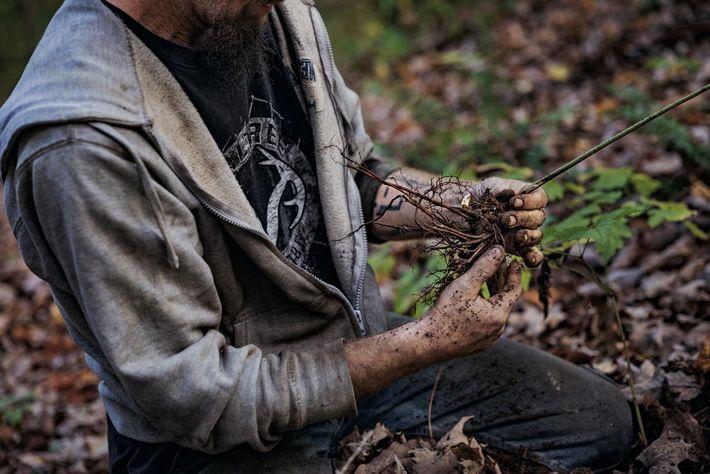Comté de Clay, Virginie-Occidentale. Brian Lively, 18 ans, aide ses parents à chercher des racines sauvages (actée ...