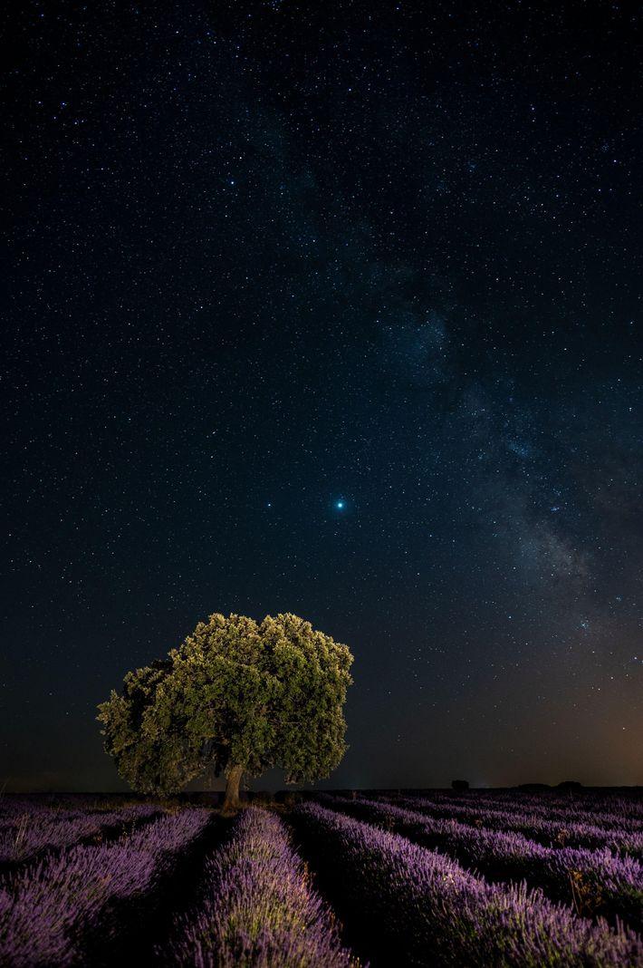 Jupiter et Saturne rivalisent d'intensité par une nuit dégagée du mois de juillet au-dessus d'un champ ...