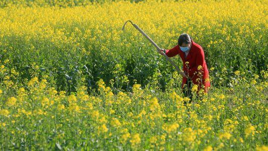 La douceur du printemps viendra-t-elle à bout du Coronavirus ?