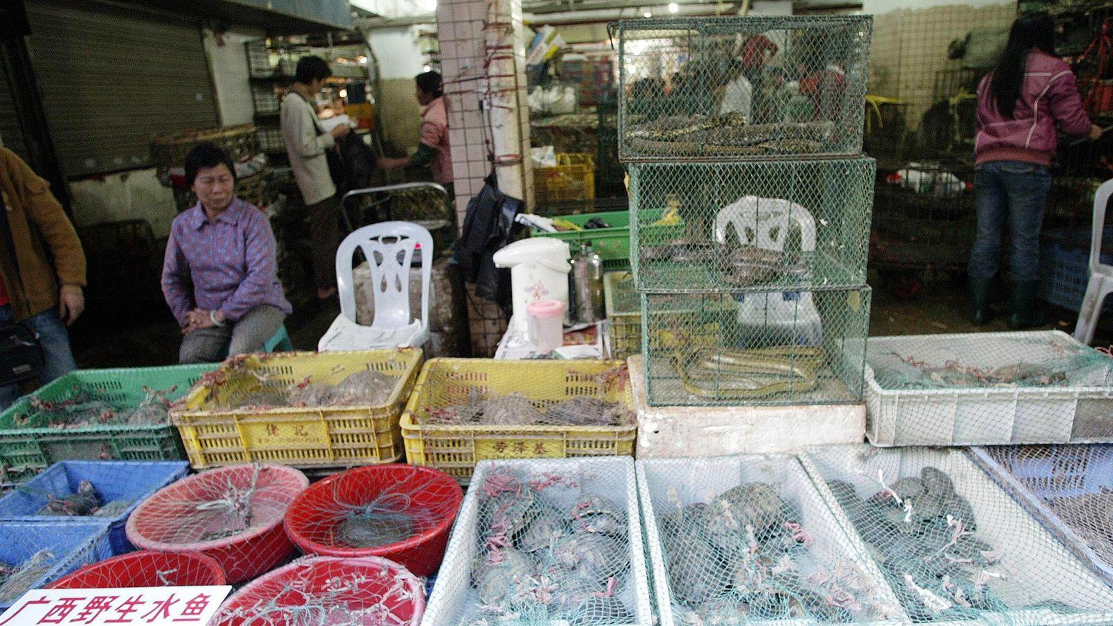 Sur un étal du marché de Shenzhen, les vendeurs exposent reptiles et mammifères vivants. En Chine, ...