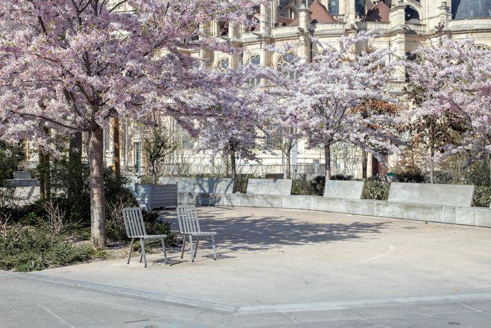 Loin des yeux des passants d'ordinaire nombreux, le printemps éclot dans le Jardin des Halles, au ...