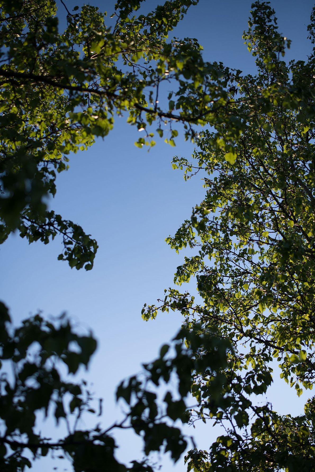 Un arbre devant le domicile familial de la photographe à Saint Charles dans le Missouri.