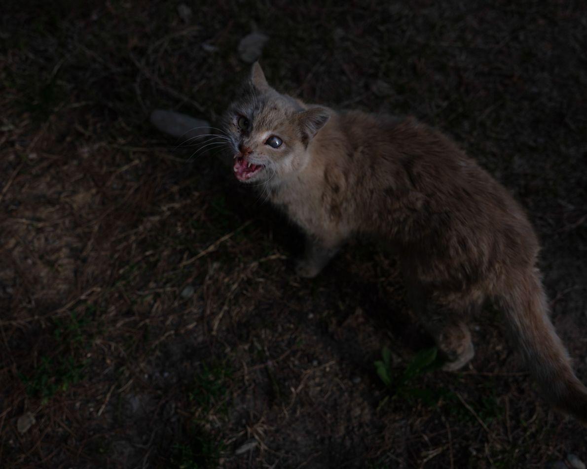 Les chats errants du quartier où vit l'auteure font l'objet d'un regain d'attention depuis que les ...