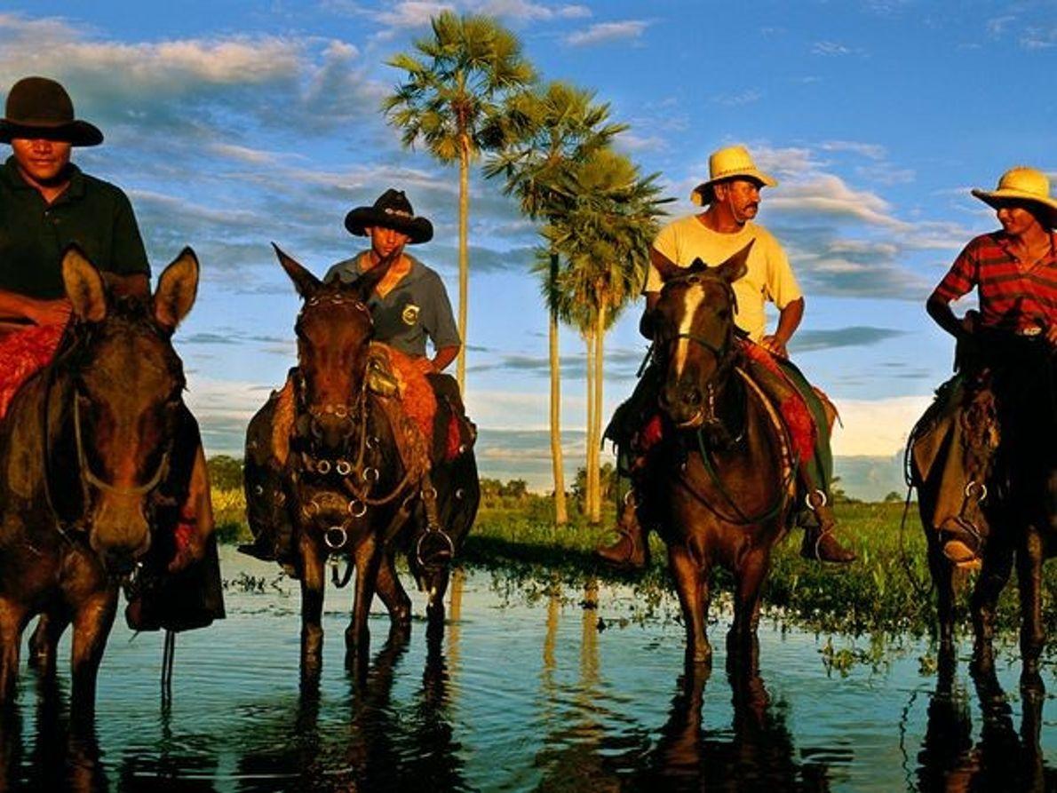 Les vachers du Pantanal