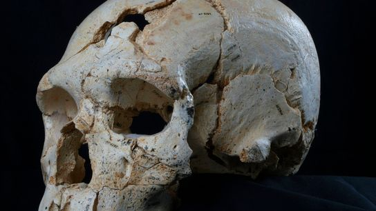 Les deux trous visibles sur ce crâne sont la preuve du premier meurtre (connu) de l'Histoire.