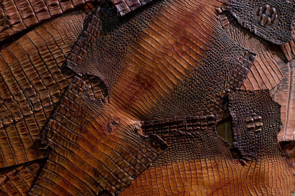 Des peaux tannées de crocodiles marins.