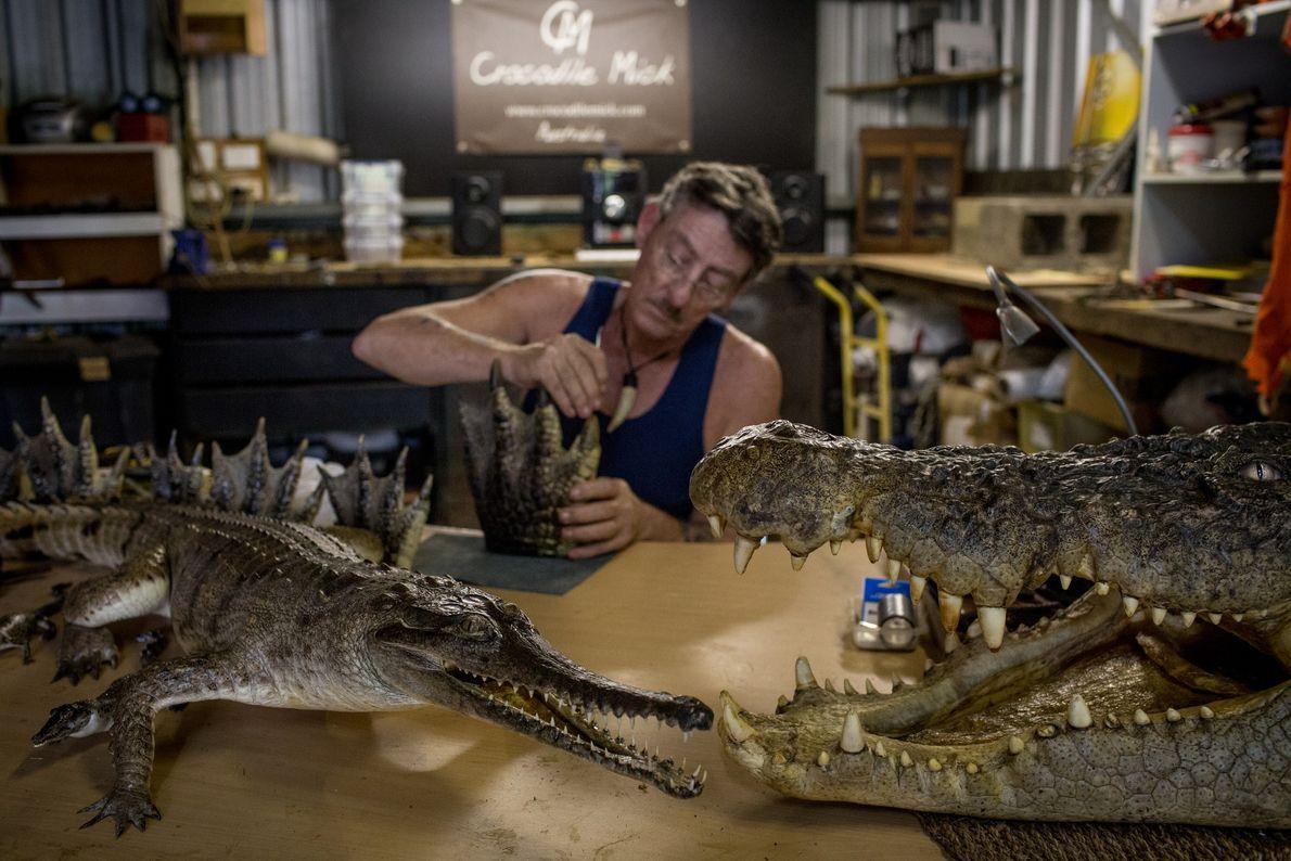 Mick Pitman, chasseur de crocodiles et taxidermiste, dans son atelier près de Darwin, en Australie.