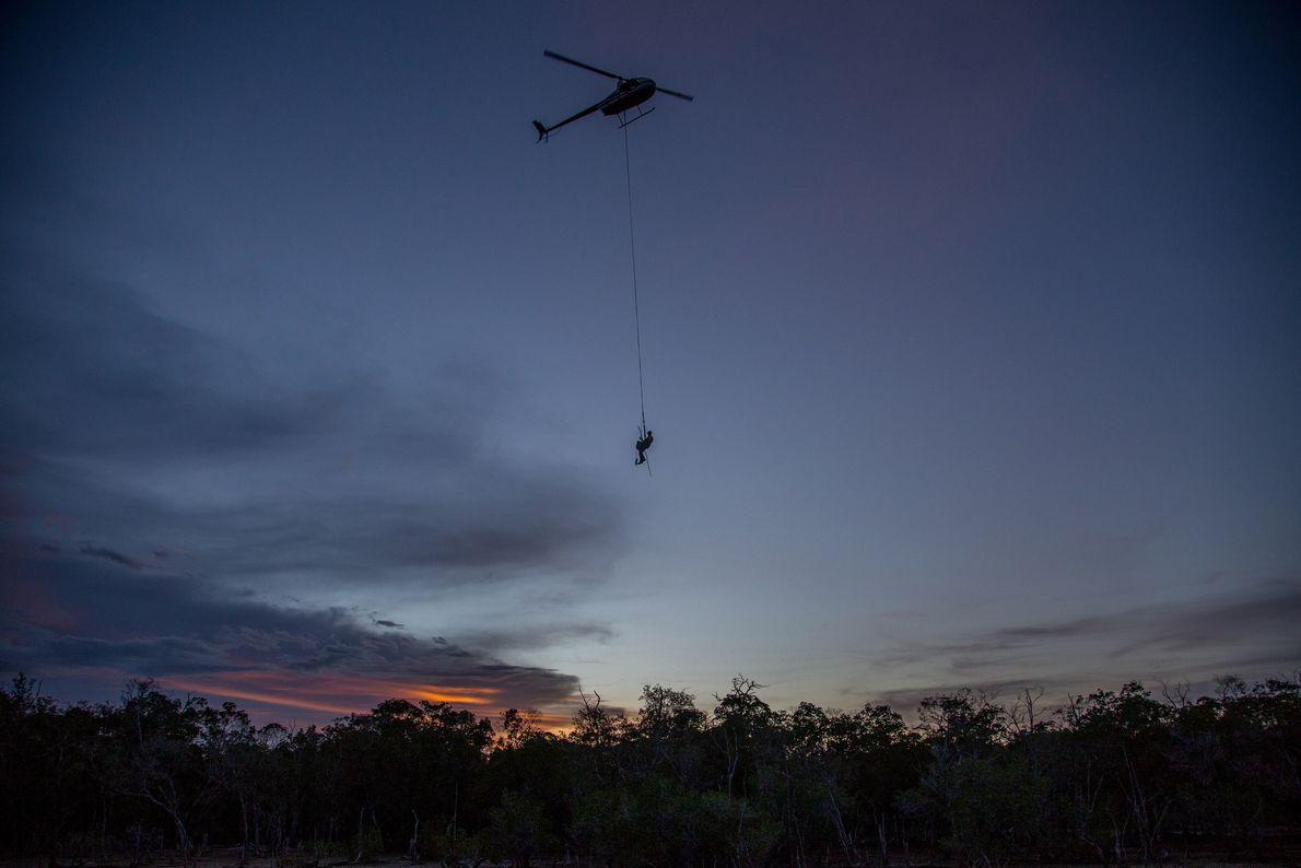 Joe Wilson, propriétaire d'une petite ferme de crocodiles familiale, est suspendu à 60 mètres au-dessus du ...