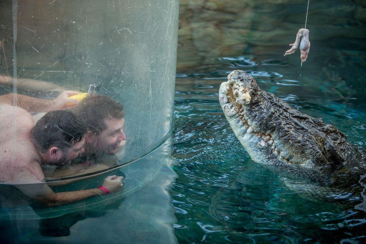 Deux touristes dans un cylindre en acrylique surnommé « cage de la mort » sont plongés ...