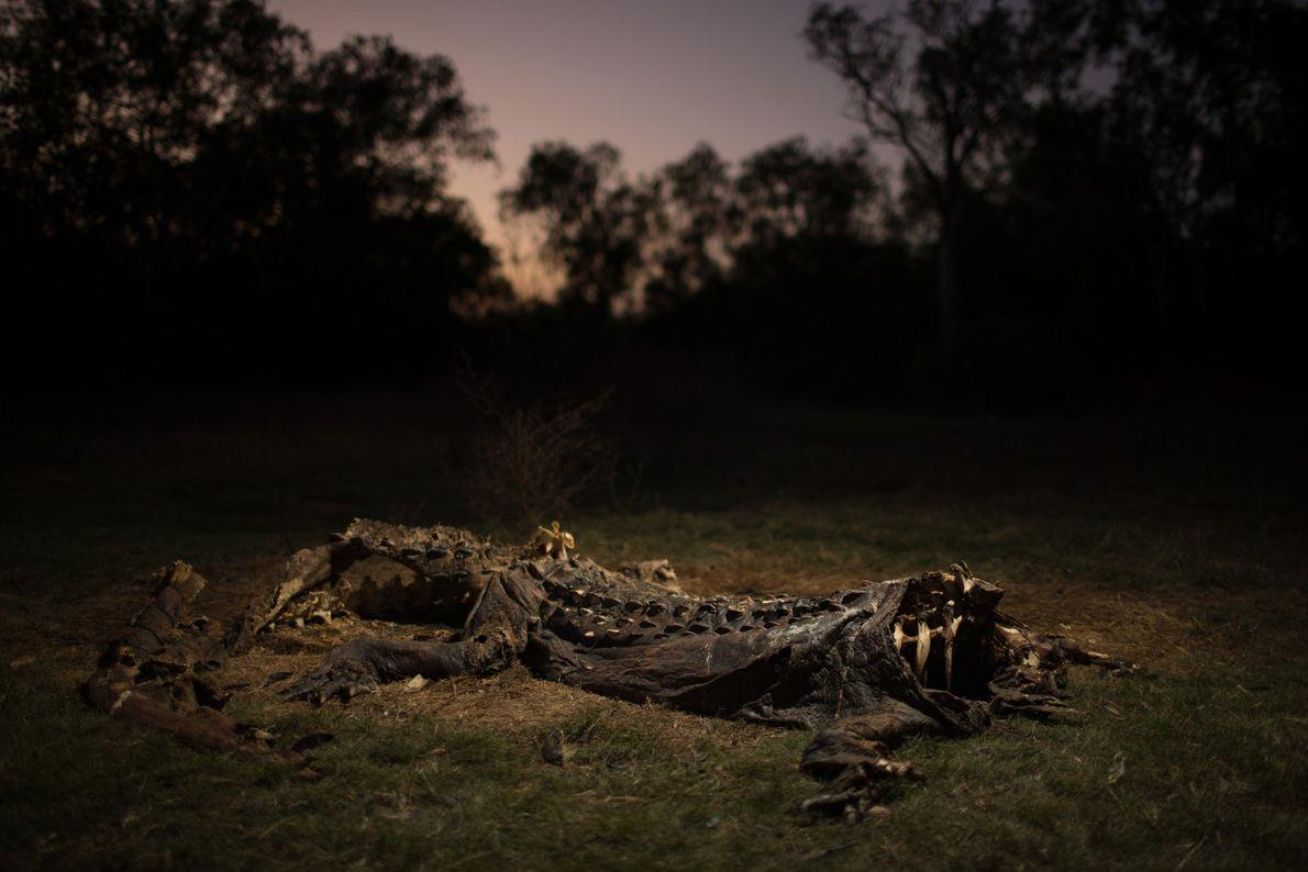 La chasse galopante qui a sévi des années 1940 à la fin des années 1960 a ...