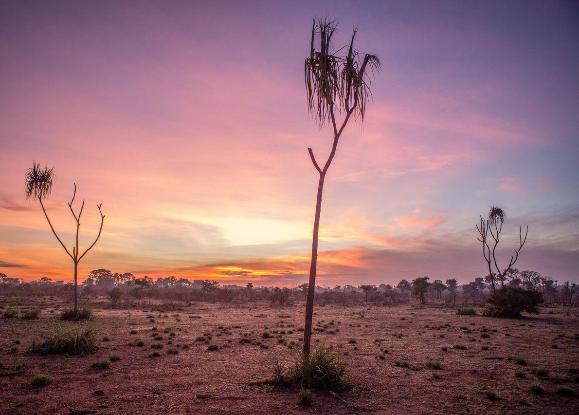 Un panorama classique au sein du bush isolé du Territoire du Nord, en Australie.