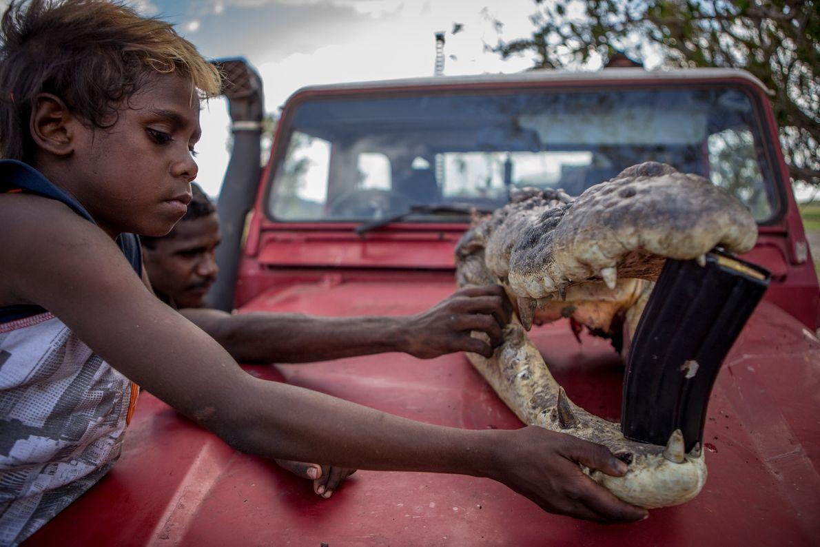 Deux aborigènes inspectent la tête d'un énorme crocodile marin tué sur les terres de leur père.