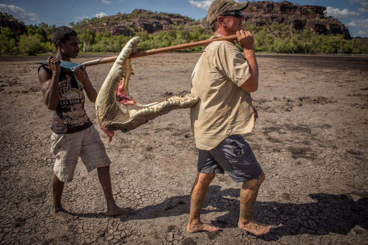 Aaron Rodwell (à droite) et un jeune aborigène utilisent une pelle pour transporter la tête d'un ...
