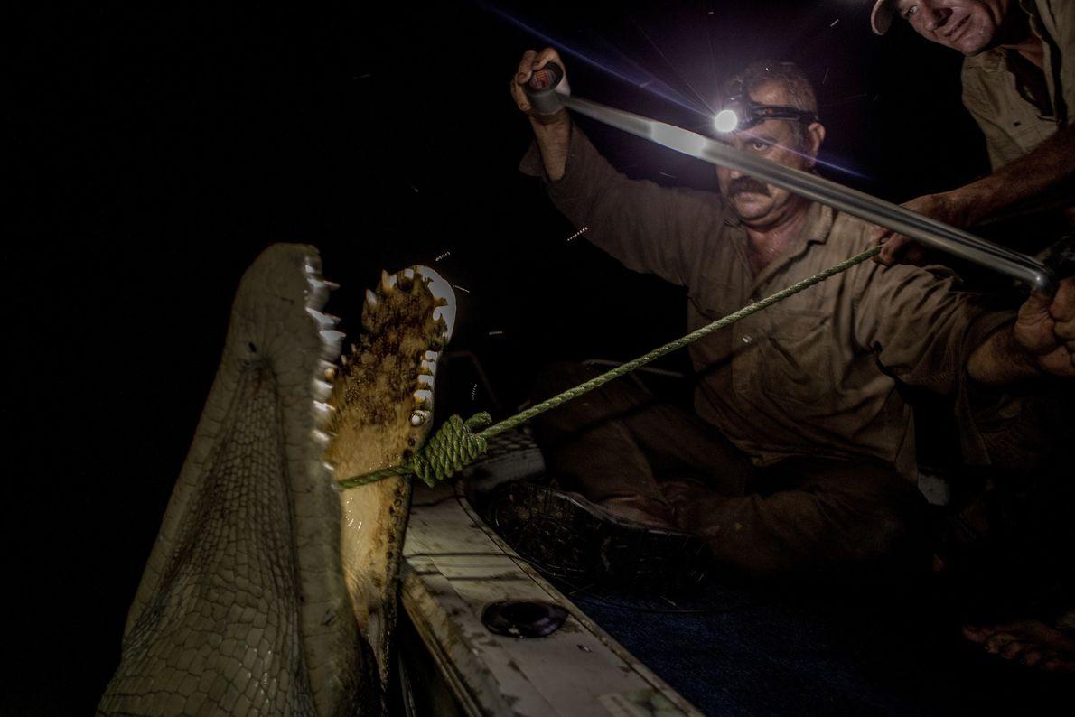 Roger Matthews (à gauche) et Aaron Rodwell chassent les crocodiles à l'aide d'harpons provenant de petits ...
