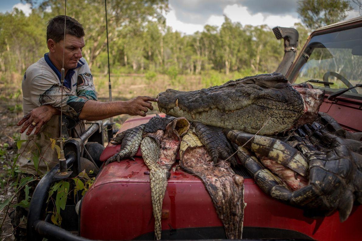 Aaron Rodwell effleure la tête d'un crocodile de quatre mètres et demi qu'il a capturé avec ...