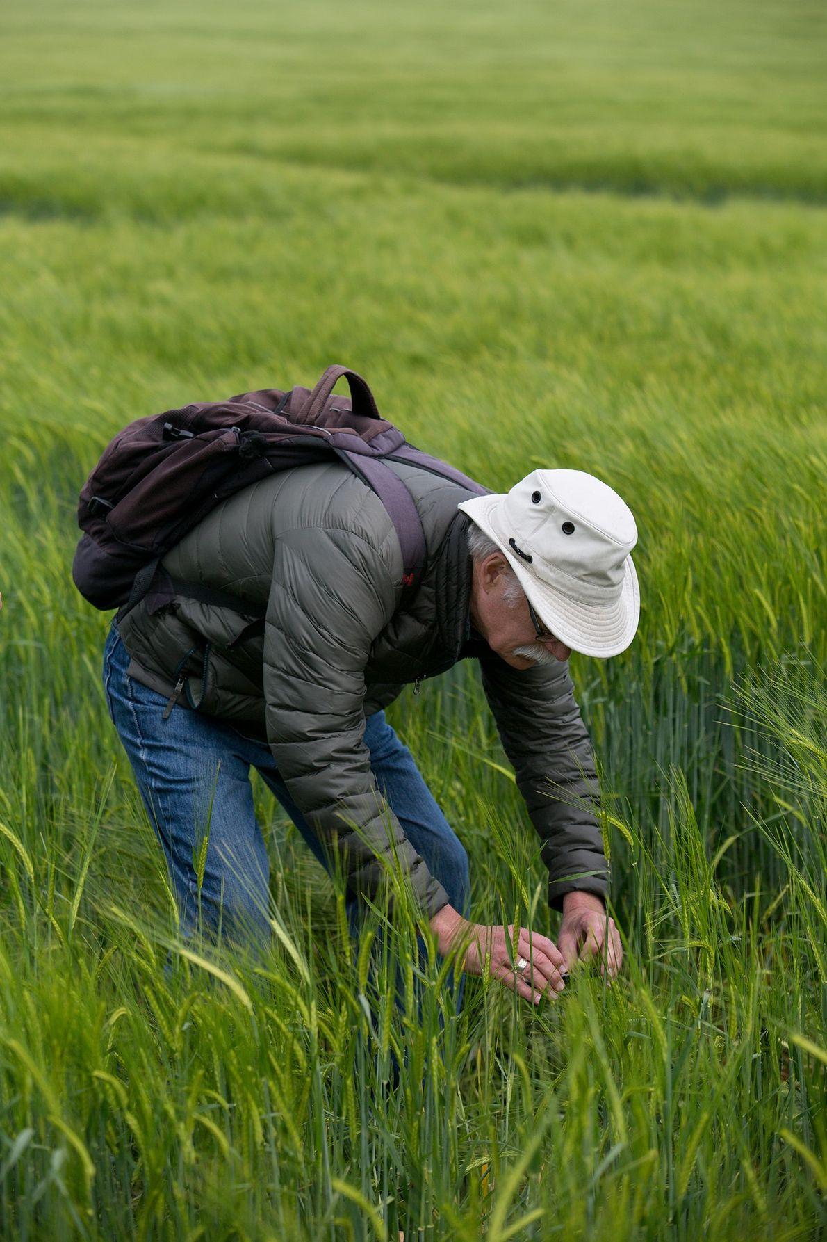 Gary King, qui étudie les agroglyphes, est aussi guide sur les sites de ces œuvres. Il ...