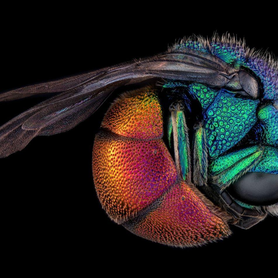 Découvrez les plus belles photos du monde microscopique de l'année 2021