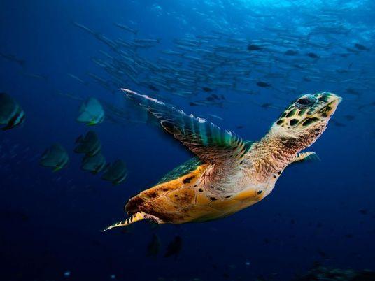 Biodiversité : 68 % des populations de vertébrés ont disparu en moins de 50 ans