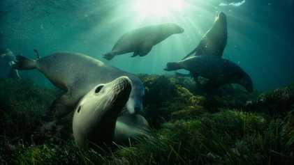 Une vie passée sous les océans en 27 photos