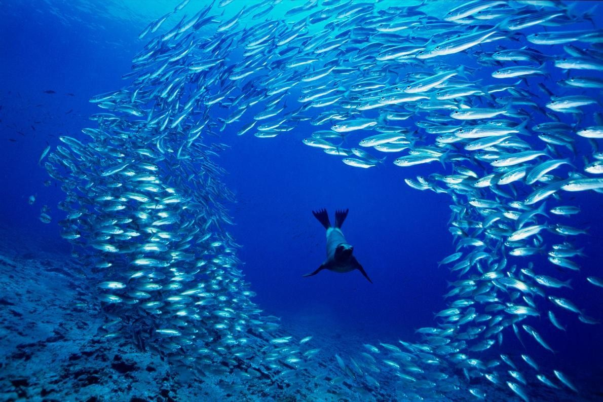 Sur le rocher de Cousins Rock, dans les îles Galápagos, un jeune lion de mer des ...